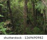 new zealand. nature in... | Shutterstock . vector #1269690982