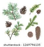 set of spruce  fir  pine or... | Shutterstock . vector #1269796135