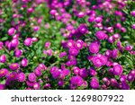 selective focus on the pink ... | Shutterstock . vector #1269807922