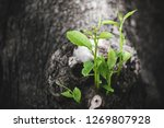young tree sprout growing from... | Shutterstock . vector #1269807928