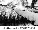 trees with snow in winter | Shutterstock . vector #1270175458