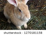 Stock photo rabbit farm a little rabbit in a cage 1270181158