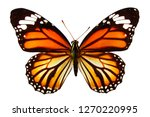 Stock photo  natural yellow butterfly isolated on white background 1270220995
