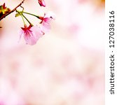 branch with pink blossoms.... | Shutterstock . vector #127038116