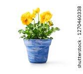 pansy flowers in flowerpot... | Shutterstock . vector #1270460338