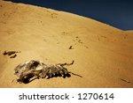 Animal skull in the desert - stock photo