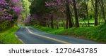 Eastern Redbud Trees  Cercis...
