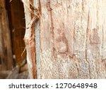 brown bark tree | Shutterstock . vector #1270648948