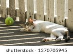 a cap was napping by the tennis ... | Shutterstock . vector #1270705945