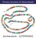 primary structure of...   Shutterstock .eps vector #1270950562