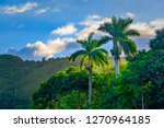 beauty of the royal palm in the ...   Shutterstock . vector #1270964185