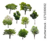 collection of isolated trees on ... | Shutterstock . vector #1271030032