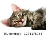 Stock photo cute kitten on white background 1271176765
