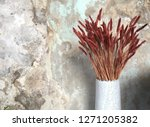Decorations of branch of red barley wheat with dry grain in vase and concrete wall in the background.