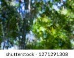 defocus bamboo forest bokeh   Shutterstock . vector #1271291308