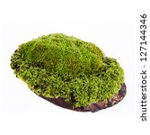 Closeup Moss On Log Isolated...