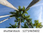 palm trees and worm eye view...   Shutterstock . vector #1271465602