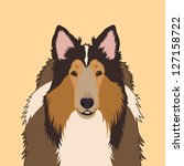 Rough Collie  The Buddy Dog