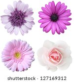 Stock photo collage with violet flowers 127169312