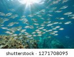 A School Of Fish In The...