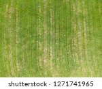 aerial view of a large patch of ... | Shutterstock . vector #1271741965
