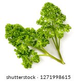 curly parsley isolated on the... | Shutterstock . vector #1271998615