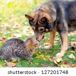 Stock photo dog and cat playing together outdoor 127201748