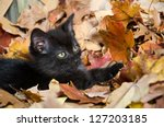 Stock photo cute baby black kitten playing in fall leaves 127203185