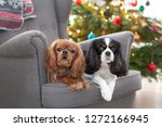 two cute dogs on the armchair... | Shutterstock . vector #1272166945