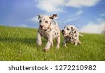 Stock photo dogs play catch me 1272210982