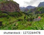 lush green vegetation in paul... | Shutterstock . vector #1272264478