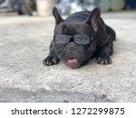 cute french bulldog wearing the ... | Shutterstock . vector #1272299875