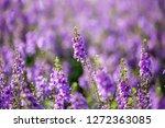 angelonia flower  goyazensis   Shutterstock . vector #1272363085