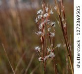 wild flowers closeup with water ... | Shutterstock . vector #1272369505