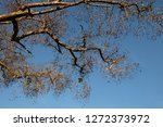 autumn tree branch shading with ... | Shutterstock . vector #1272373972