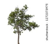 isolated tree on white... | Shutterstock . vector #1272373975