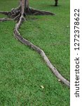 tree roots on green grass... | Shutterstock . vector #1272378622