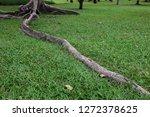 tree roots on green grass... | Shutterstock . vector #1272378625