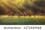 Horse herd run in sunlightwith...