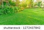 Green Grass Lawn In A Garden...