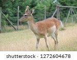 animal  herbivore cute | Shutterstock . vector #1272604678