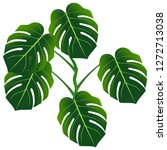 dark green leaves of monstera... | Shutterstock .eps vector #1272713038