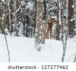 A Young Virginia Deer Takes A...