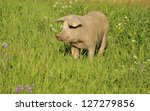 Happy Pig Surrounded By Grass...