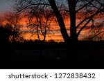 Silhouetted Trees Against An...