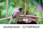 bird build their nest and hatch ... | Shutterstock . vector #1272894625