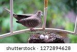 bird build their nest and hatch ... | Shutterstock . vector #1272894628