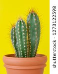 Cactus Plant In A Vase Over A...