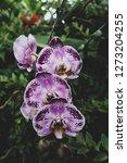 Purple Orchids Exotic Colorful Floral - Fine Art prints