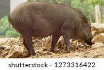 close up. the black boar in... | Shutterstock . vector #1273316422